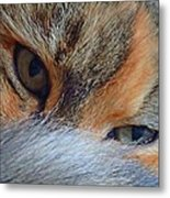 Who Disturbs My Cat Nap? Metal Print