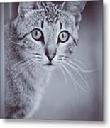What Eyes You Have Metal Print