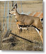 What Fence Metal Print