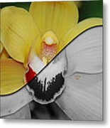 What Life Would Be Like Without Color Metal Print