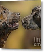 What Lovely Teeth You Have Metal Print