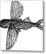 What The Flying Fish Metal Print