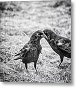 What The Raven Said Metal Print by Susan Capuano