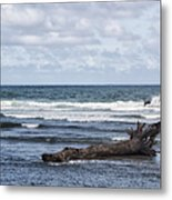 What The Sea Brought Back Metal Print
