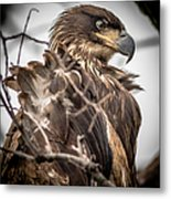 Whats A Little Wind..... Metal Print