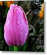 What's Old And New Metal Print