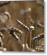 Wheat Metal Print