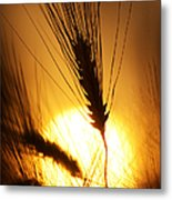 Wheat At Sunset Silhouette Metal Print