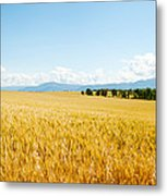 Wheat Field Near D8, Brunet, Plateau De Metal Print