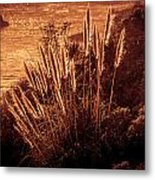 Wheat Grass Metal Print