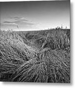 Wheat Waves Metal Print