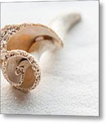 Whelk Shell New Jersey Beach Metal Print