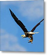 When Dogs Fly Metal Print