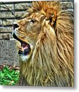 When He Speaks...they Listen...lazy Boy At The Buffalo Zoo Metal Print