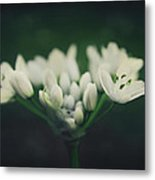 When Love Was Young And New Metal Print