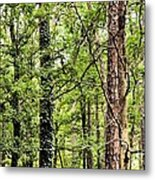 When The Forest Calls To Me Metal Print