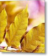 When The Leaves Turn Gold Metal Print by Artist and Photographer Laura Wrede