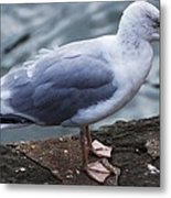 Where Did I Put That Fish? Metal Print