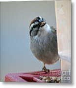 Where Did All My Food Go? Metal Print