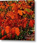 Where Has All The Red Gone - Autumn Leaves - Orange Metal Print