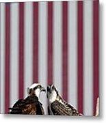 Where Ospreys Dare Metal Print