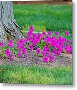 Where Petunia Grows Metal Print