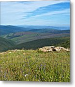 Where The Caribou Roam Near Taylor Highway-ak  Metal Print