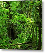 Where The Forest People Live Revised Metal Print
