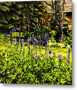 Where The Lupines Grow Metal Print