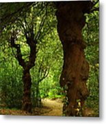 Wherever The Path May Lead Metal Print