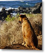 Wherever You Go Let Me Go Too Metal Print by Christi Kraft