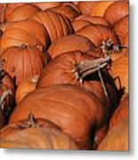 Which One Is The Great Pumpkin Metal Print