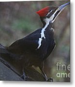 Which Way Is The Suet? Metal Print