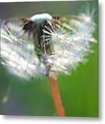 Whimsy Dandelion Metal Print by Candice Trimble