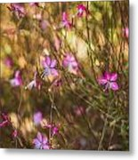Whirling Butterfly Bush Metal Print