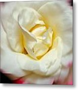 Whirling Rose Metal Print