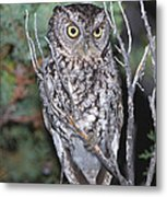 Whiskered Screech Owl Metal Print