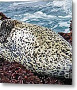Whiskers And Spots Metal Print