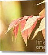 Whisper Metal Print by Andrew Brooks
