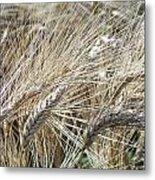 Whispering Wheat Metal Print