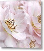 Whispers Of Pink Roses Metal Print