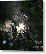 Whisps And Glares Metal Print