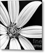 White And Black Flower Close Up Metal Print