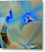 White And Blue Orchid Metal Print