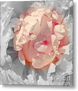 White And Pink Lace Metal Print