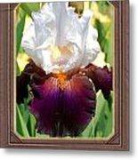 White And Purple Iris Metal Print