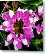 White And Purple Wildflower Metal Print