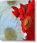 White And Red Flowers Metal Print