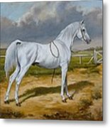 White Arabian Stallion Metal Print