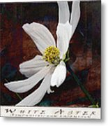 White Aster Study Iv - Titled Metal Print